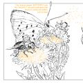 Pollinators-bees-composition-1b.jpg